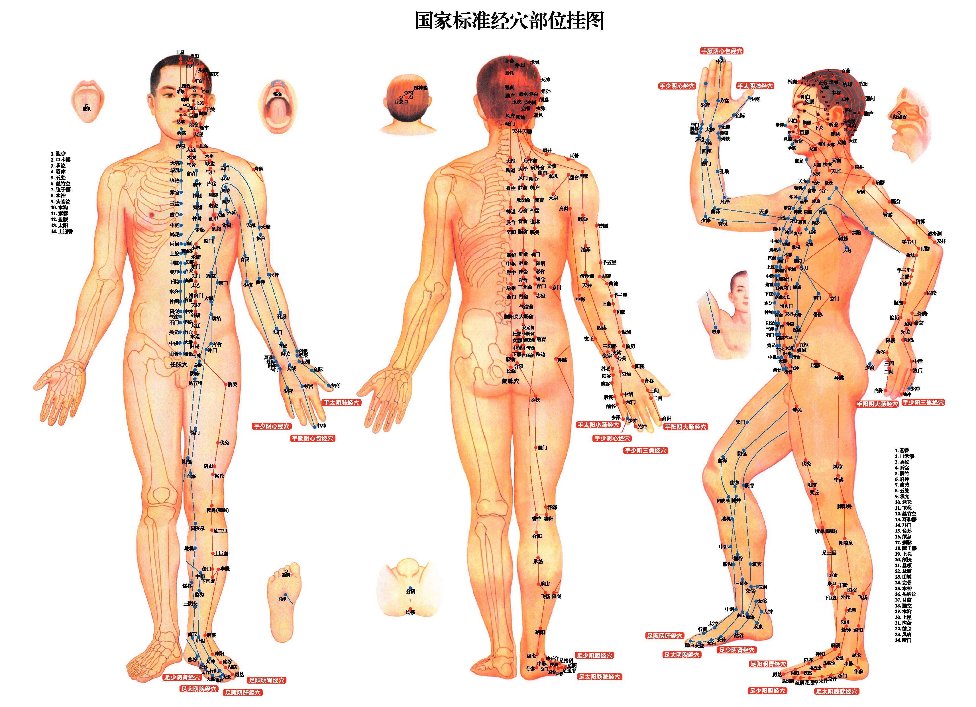 中醫針灸穴位圖